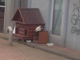 A municipal cat house in Istanbul.