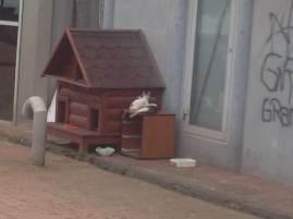 A municipal cat house in Istanbul.